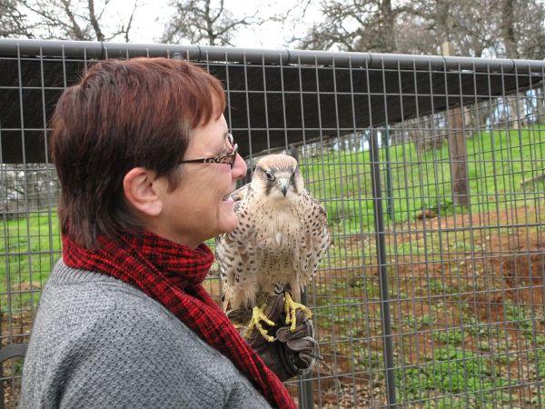 kate-draga-lanner-falcon